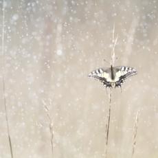 Bastien Riu, Sous la pluie