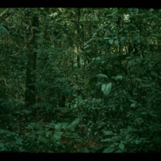 "Daniel Steegman Mangrané, ""16mm,"" 2009–2011. 16mm film, color, synchronized 5.1 digital sound, 5:26 minutes."