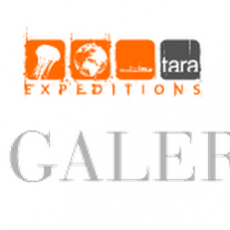 Tara Galerie