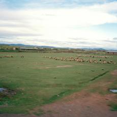 Pâturage, Bolivie.  2011 , photo argentique