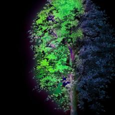 Radiant Tree, 2014 © HeHe