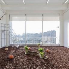 """Jr-Shin Luo's Terrarium: """"Ong Lai,"""" """"Bird's Nests,"""" """"Moss Balls,"""" 2014."""