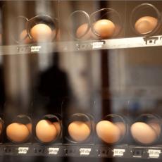Frech Egg Vendig machine, Thierry Boutonnier.