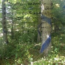 bluedtreesscore1400