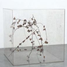 Gustav Metzger, Mobbile, 1970-2005. Boite en perpex, plante.