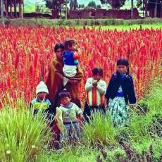 Agriculture familiale en Bolivie