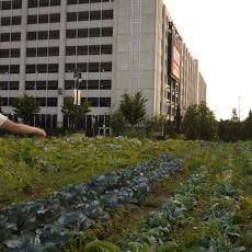agriculture-urbaine-alu