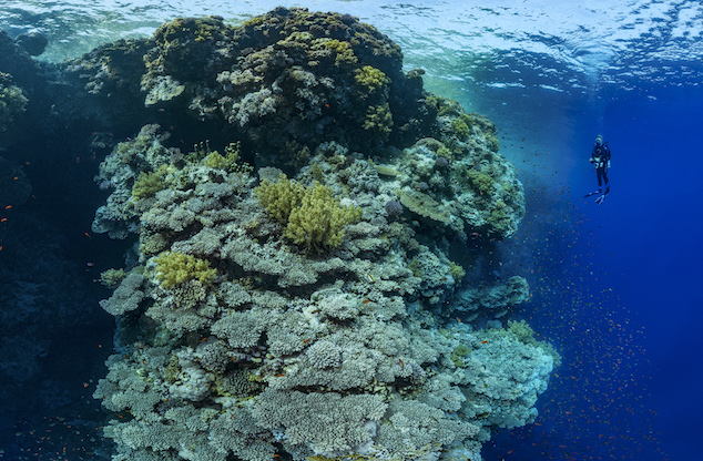 L'immensitÈ du rÈcif corallien