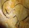 rhinolaineuxchauvet