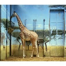 11_candidahoefer_zoologischergartenparisii_1997