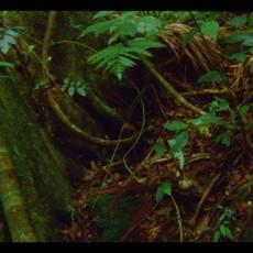 780x440_spiral_forest_02_1024x782