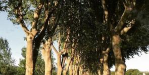 L'eloge de l'arbre.2